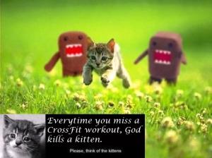 crossfit-kittens
